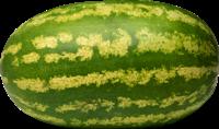 karolinagross