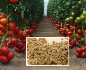 ves-pomidor