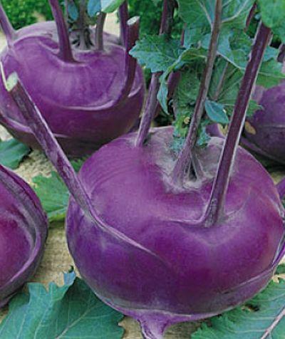 Семена капусты кольраби ВЕНСКАЯ ГОЛУБАЯ