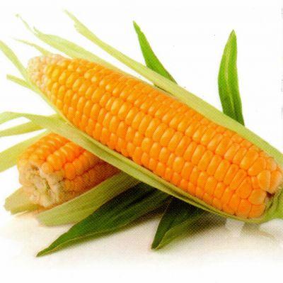 Семена сахарной кукурузы ВЕГА